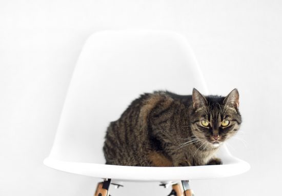 Cat sitting on the white chair